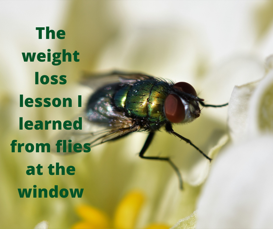 The Weight Loss Lesson I've Learned From Flies At The Window